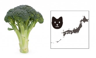 broccolidog